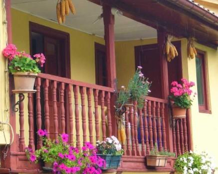 Plantas en el balcón