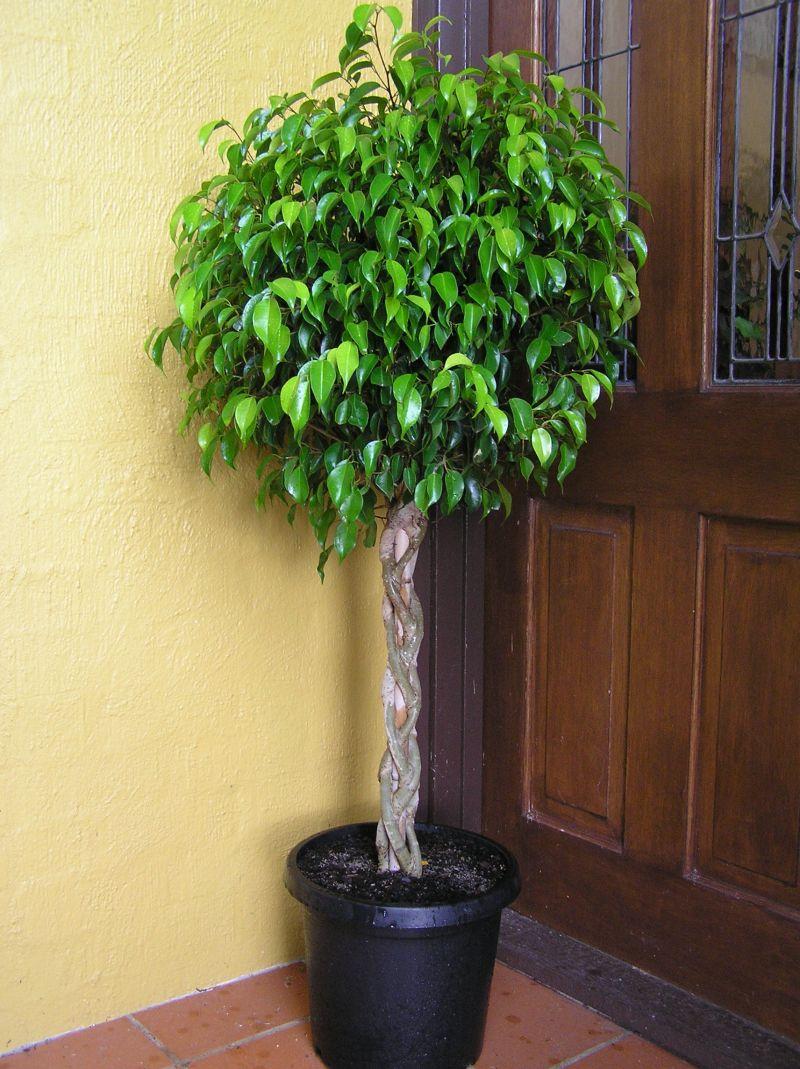 Plantas de interior que embellecen y purifican el aire